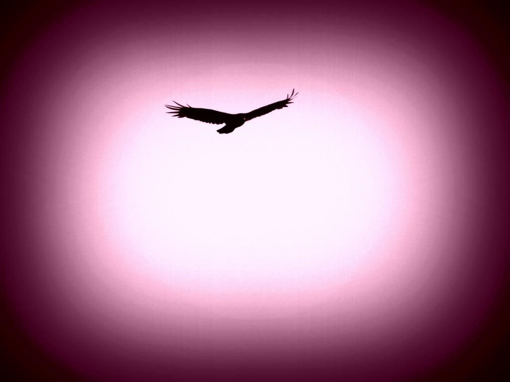 bird flying purple