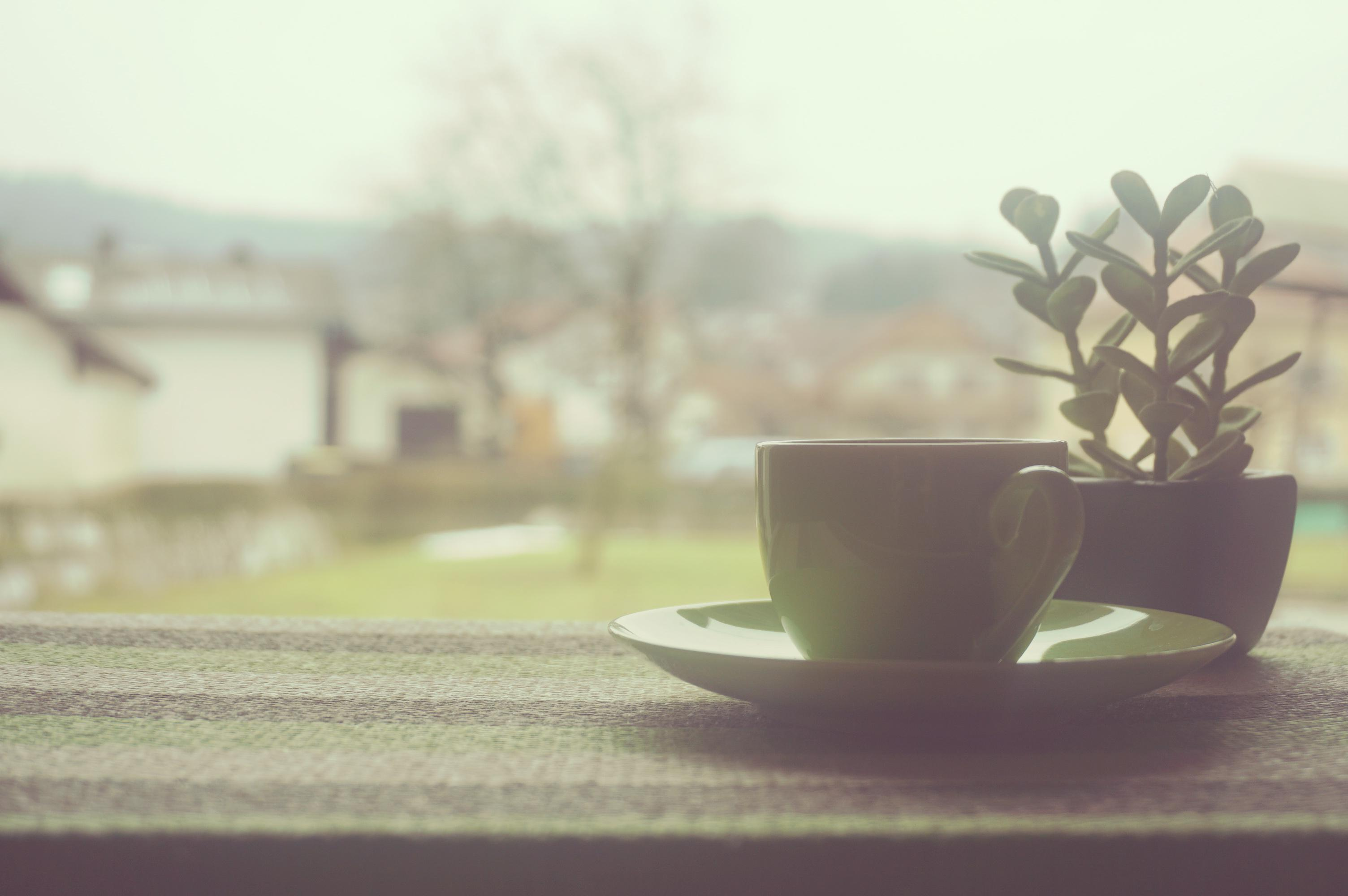 tea cup at the window